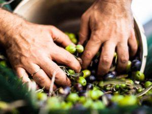 Rhizoma Extra Virgin Olive Oil Κρανίδι