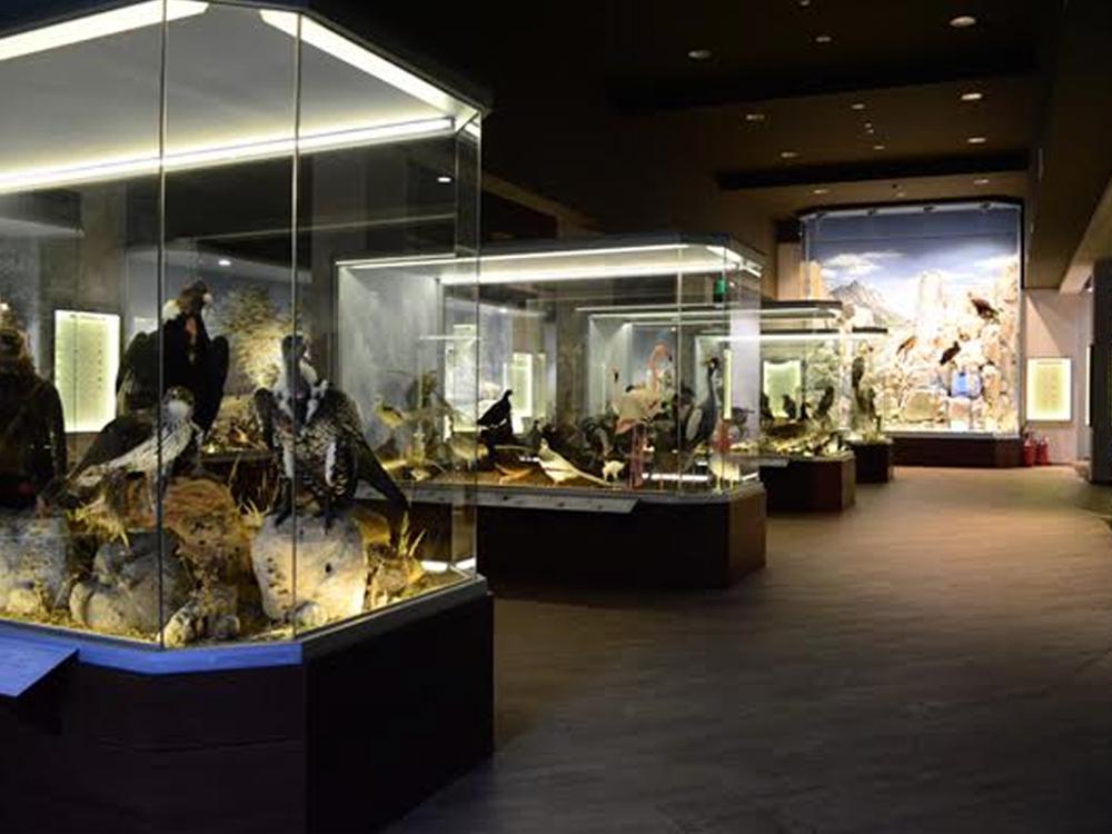Μουσείο-Φυσικής-Ιστορίας-Μανιταριών-Μετεώρων-Νομή-Natural-History-Museum-Of-Meteora-Mushrooms-Nomee-Foods-7
