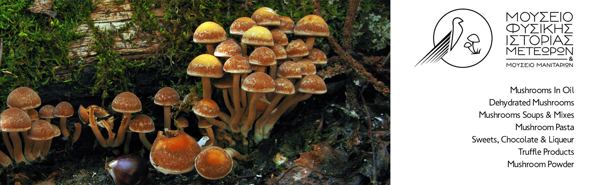 Μουσείο-Φυσικής-Ιστορίας-Μανιταριών-Μετεώρων-Νομή-Natural-History-Museum-Of-Meteora-Mushrooms-Nomee-Foods-2