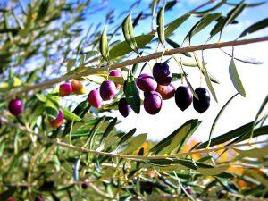 εξαιρετικό-παρθένο-ελαιόλαδο-βιολογικό-νομή-extra-virgin-olive-oil-organic-sirreon-nomee-foods