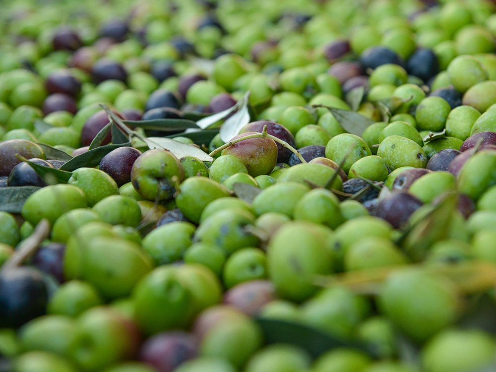 Four generations of olive oil producers lay behind Markellos